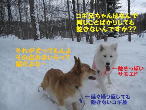 2010 1 30 dogs2
