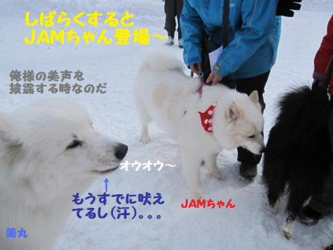 2010 1 30 dogs3
