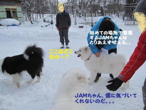 2010 1 30 dogs4