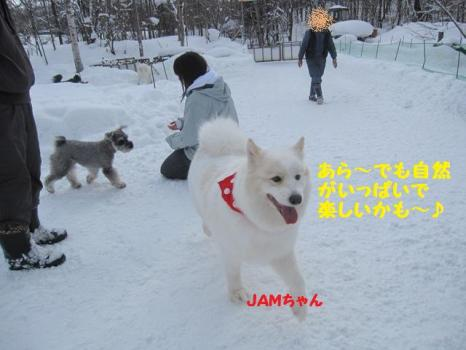 2010 1 30 dogs5