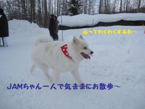 2010 1 30 dogs6