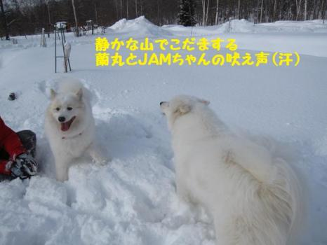 2010 1 30 dogss1