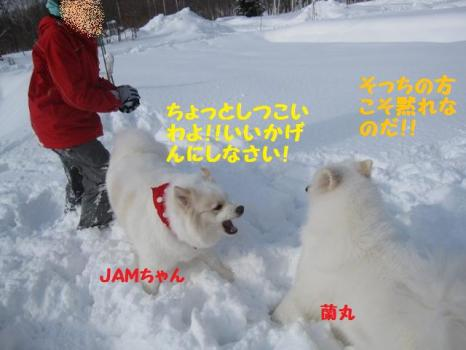 2010 1 30 dogss2