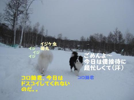 2010 1 30 dogss9