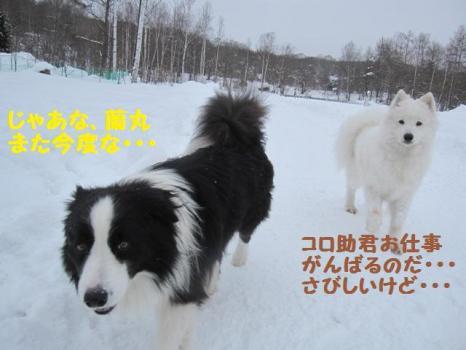 2010 1 30 dogsss1