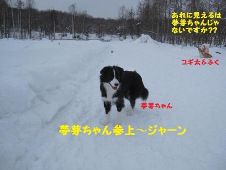 2010 1 30 dogsss2