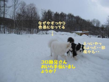 2010 1 30 dogsss3