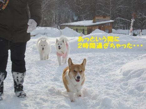 2010 1 30 dogsss4