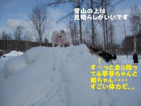2010 1 30 dogsss5
