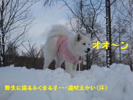 2010 1 30 dogsss6