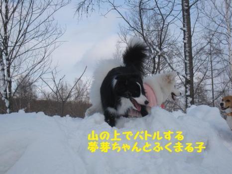 2010 1 30 dogsss7