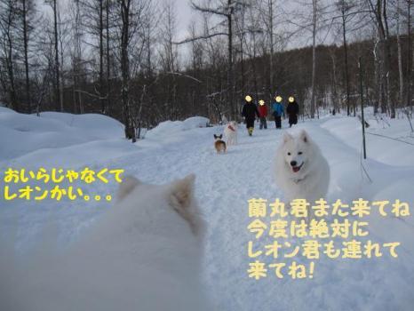2010 1 30 dogsss8