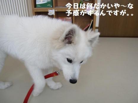 2010 2 3 fuku1