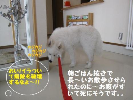 2010 2 3 fuku2