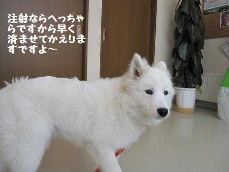 2010 2 3 fuku3