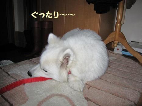 2010 2 3 fuku5