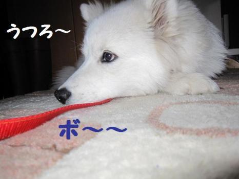 2010 2 3 fuku6