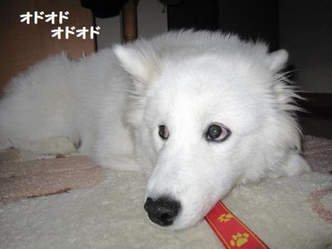 2010 2 3 fuku7