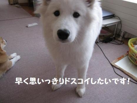 2010 2 3 fuku9
