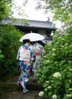 紫陽花寺2