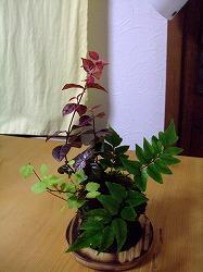 2011_1216三日月豆0040