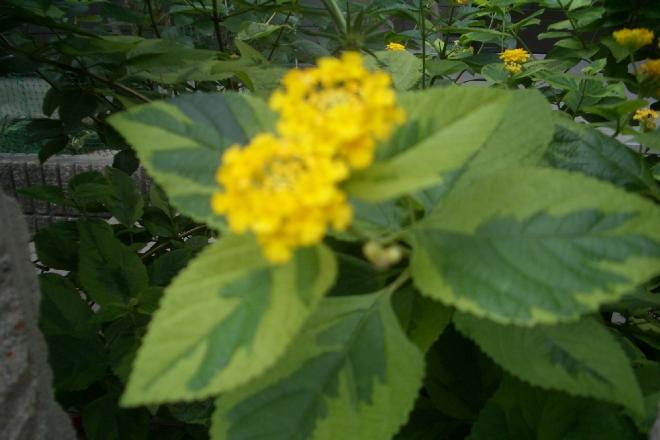 mini_綺麗な花