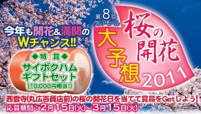 第8回桜の開花予想 川越KOME山田屋