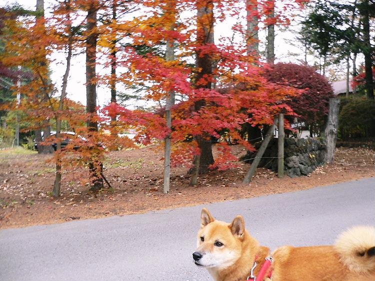 karu紅葉と