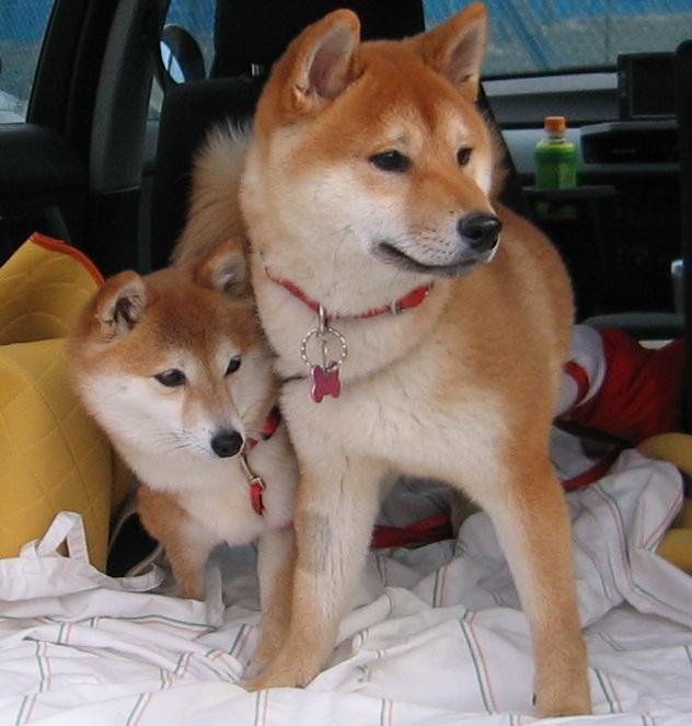 栗とO次郎
