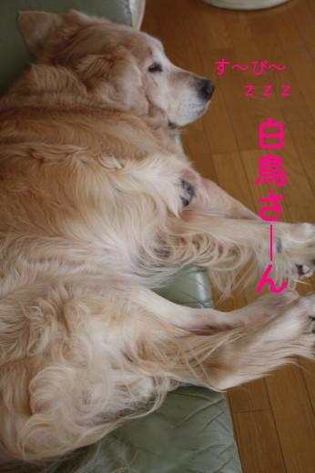 bu-83240001.jpg