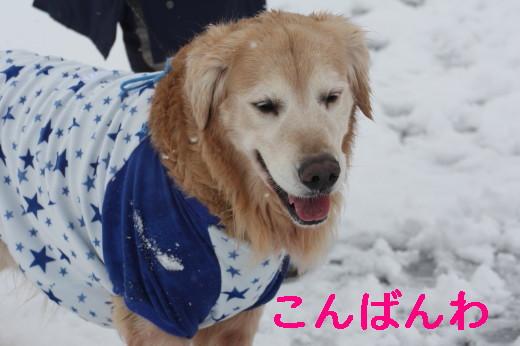 bu-83270001.jpg
