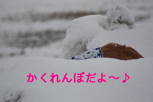 bu-83330001.jpg