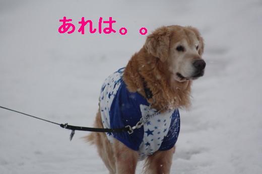 bu-83360001.jpg
