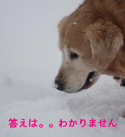 bu-83450001.jpg