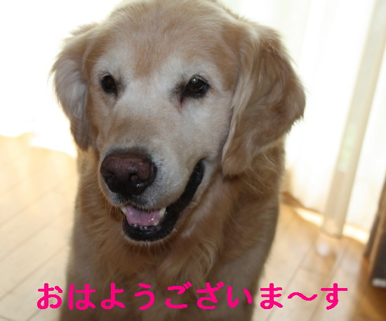 bu-83470001.jpg