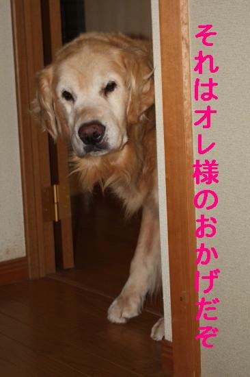 bu-83490001.jpg