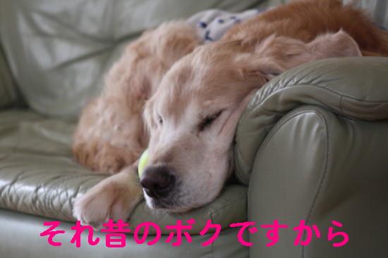 bu-83650001.jpg