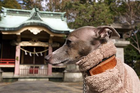 東照宮とイタグレ小太郎