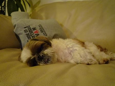 疲れちゃった小太郎さん