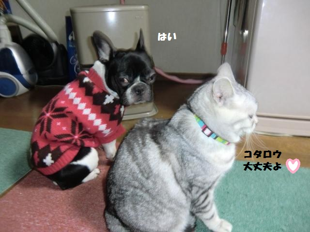 CIMG3403_convert_20120219192959.jpg