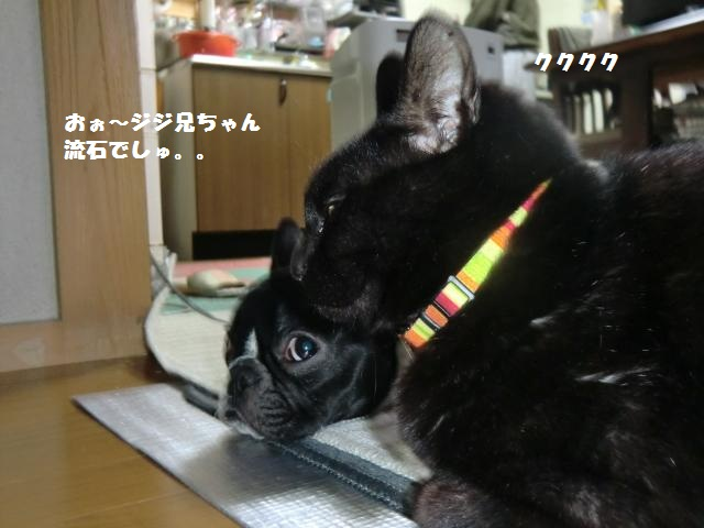 CIMG3491_convert_20120227194118.jpg