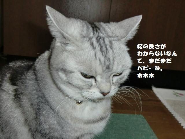 CIMG3687_convert_20120401081207.jpg
