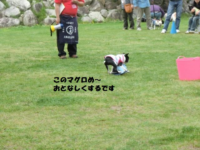 CIMG3982_convert_20120506203138.jpg