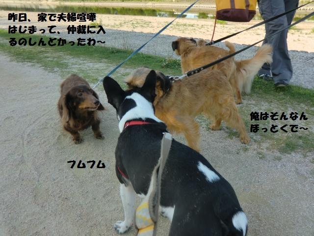 CIMG4390_convert_20120629184320.jpg
