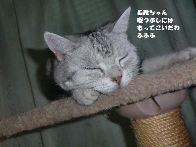 CIMG4607_convert_20120722203919.jpg