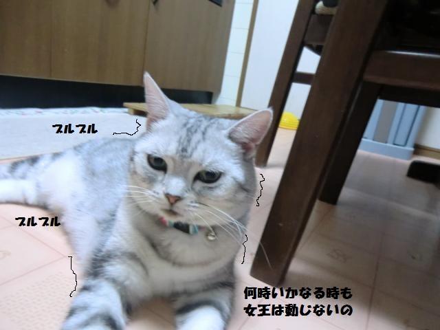 CIMG4836_convert_20120818164213.jpg