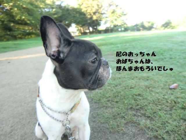 CIMG4904_convert_20120821211243.jpg