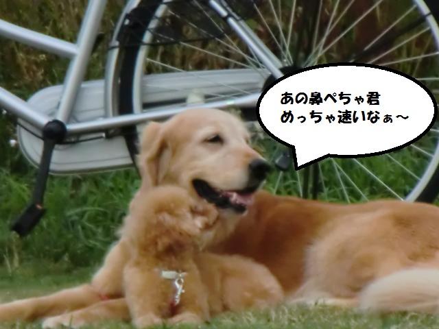 CIMG5102_convert_20120910204434.jpg