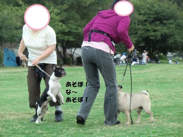 CIMG5112_convert_20120909201207.jpg