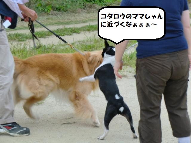 CIMG5234_convert_20120922193238.jpg